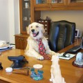 dog_in_office