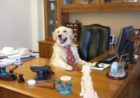 Animals Playing Out Your Average Day At The Office
