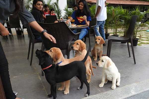 TherPup dog cafe bengaluru