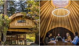 Microsoft Has Built Treehouses For Its Employees Where They Can Conduct Meetings