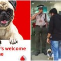 vodafone pug in stores